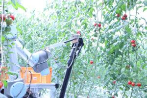 AI×自動走行型アームロボット「トマト自動収穫ロボット」の実証実験を開始
