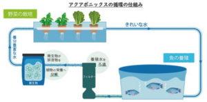 アクアポニックス試験農場『湘南アクポニ農場』を神奈川県藤沢市に開設